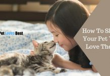 How To Show Your Pet You Love Them Featured Image