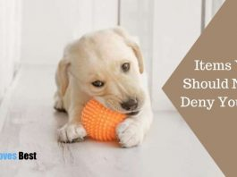 Items You Should Never Deny Your Pet Featured Image