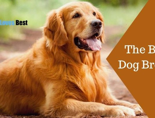 The Best Dog Breeds Featured Image