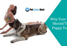 Why Your Pup Should Try Puppy Yoga Featured Image