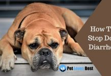 How To Stop Dog Diarrhea Featured Image