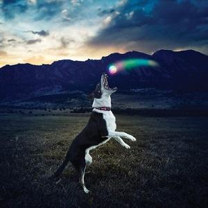Nite Ize GlowStreak LED Dog Ball