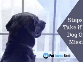 Steps to Take if Your Dog Goes Missing Featured Image