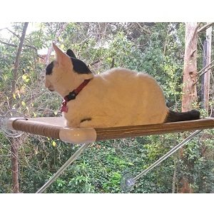 Ultimate Cat Perch The No Hanging Wires