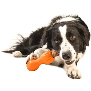 Best Chew Toy for Puppies