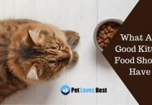 What All Good Kitten Food Should Have Featured Image