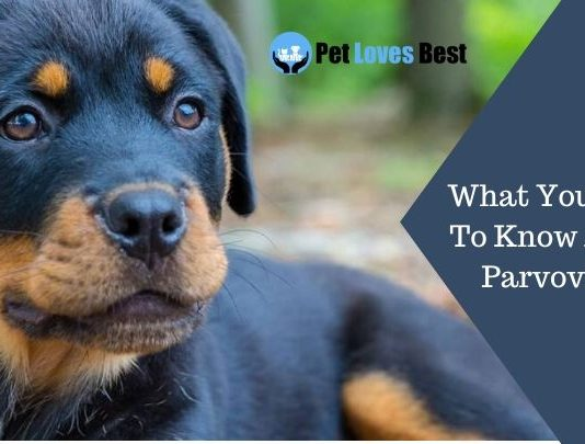 What You Need To Know About Parvovirus Featured Image