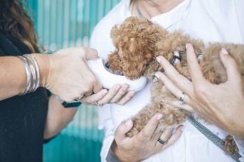 a dog at vet's office