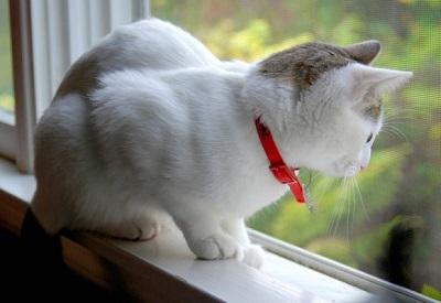 why cat window perch