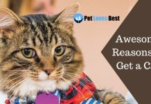 Awesome Reasons to Get a Cat Featured Image