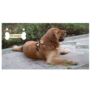 Chai's Choice Dog Harness for Running