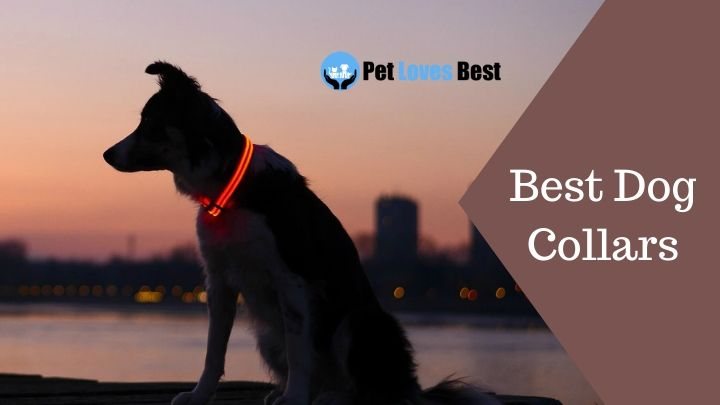 Featured Image Best Dog Collars