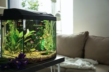 aquarium in drawing room