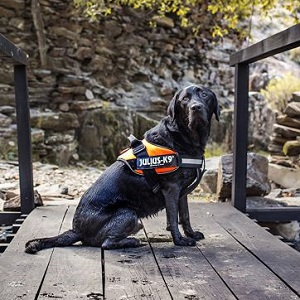 Julius-K9 IDC Harness for Dog