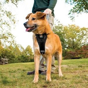 Kurgo Tru-Fit Dog Harness for Car