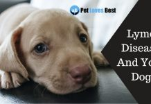 Lyme Disease And Your Dog Featured Image