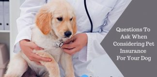 Questions To Ask When Considering Pet Insurance For Your Dog Featured Image