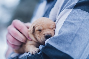 A puppy in a human's hand