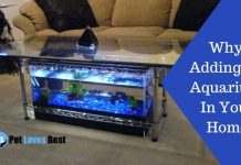 Why Adding An Aquarium In Your Home Featured Image