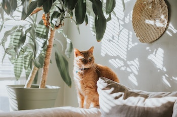 cat in an apartment