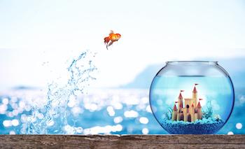 a goldfish jumping into an aquarium