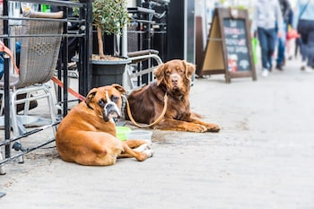 Dogs tied outside restaurants
