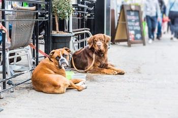Dogs tied outside restaurants