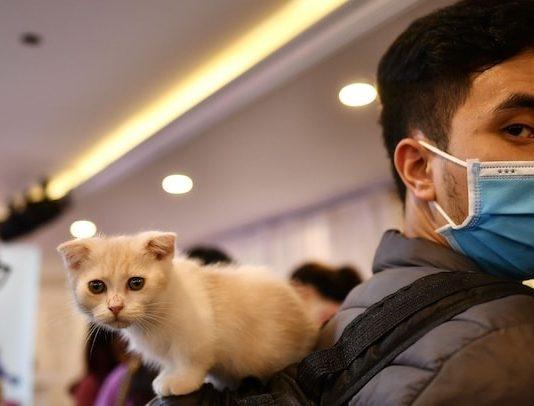 Cats Coronavirus