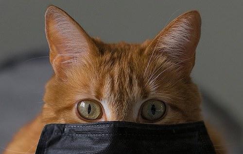 Can Cats Spread Coronavirus?