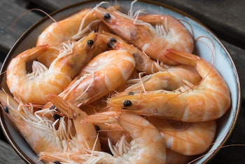 raw shrimps for dogs