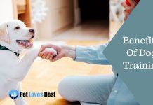 Benefits Of Dog Training Featured Image