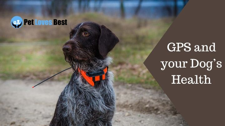 GPS and your Dog's Health Featured Image
