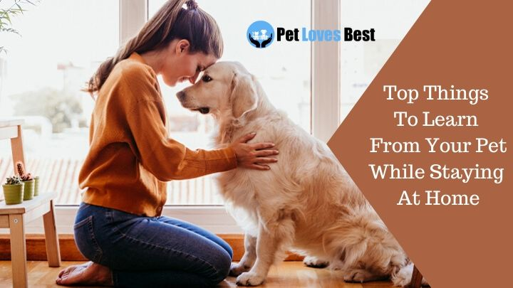 Top Things To Learn From Your Pet While Staying At Home Featured Image