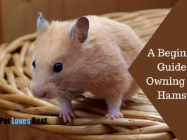A Beginner's Guide to Owning a Pet Hamster Featured Image