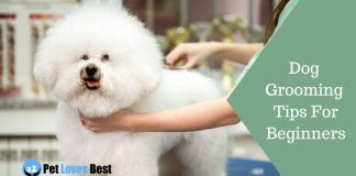 Dog Grooming Tips For Beginners Featured Image