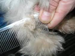 Matted Dog Coats require special clippers