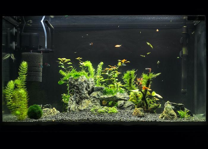 pumps in aquarium