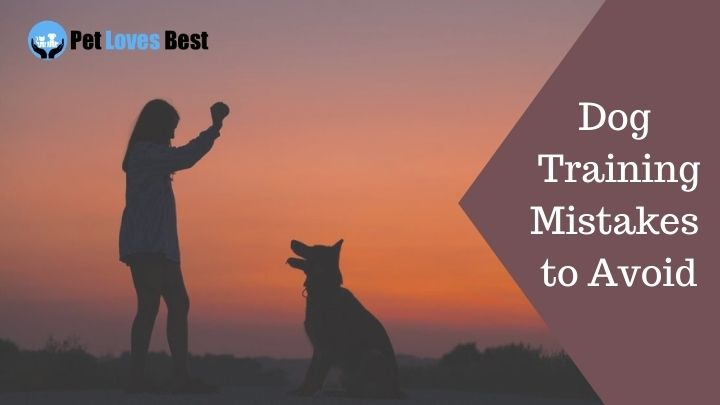 Dog Training Mistakes to Avoid Featured Image