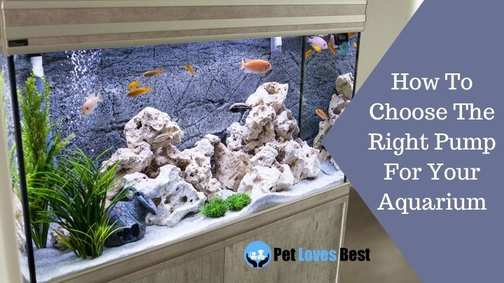 How To Choose The Right Pump For Your Aquarium Featured Image