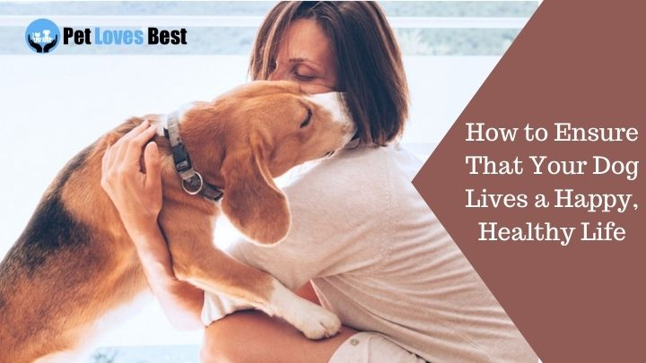 How to Ensure That Your Dog Lives a Happy, Healthy Life Featured Image