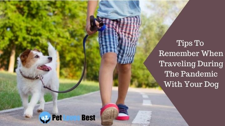 Tips To Remember When Traveling During The Pandemic With Your Dog Featured Image