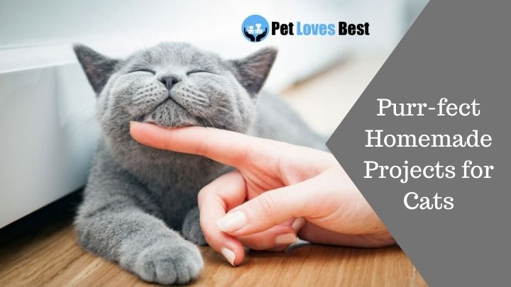 Purr-fect Homemade Projects for Cats Featured Image
